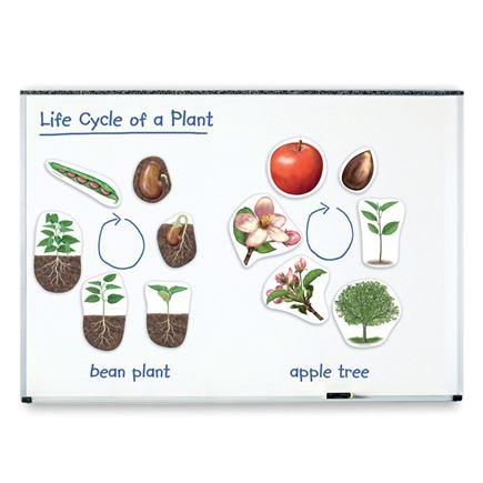 Magnetický, životný cyklus rastlín - SC00679BB