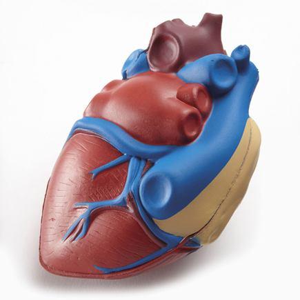 Gumený model srdca (2 časti) - SHHBB