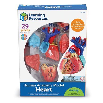 Anatomický model srdca - LER3334